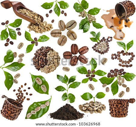 Collection set of coffee grains beans with leaves of coffee tree isolated on white