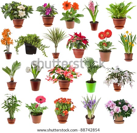 collection set of different  spring flower houseplants  in flowerpot,  isolated on white background