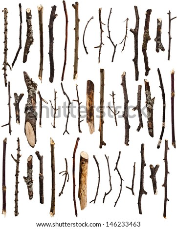 collection set of dry tree...