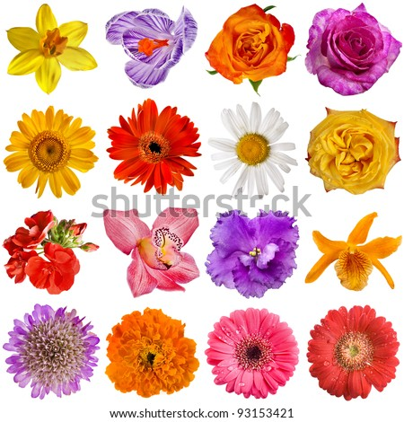 Collection set of Flower heads isolated on white background