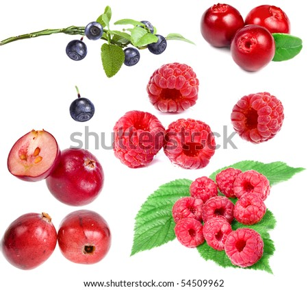 collection set of forest berries isolated on a white background