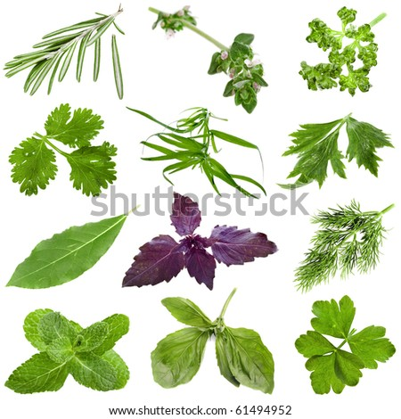 Collection set of fresh herbs isolated on white background