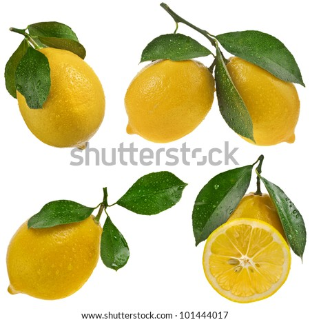 Collection set of Lemon fruits with leaves on a white background