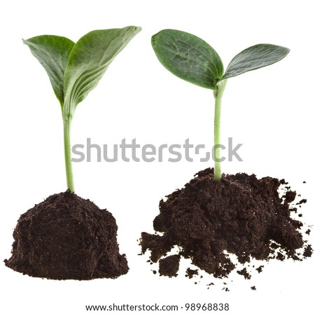 Collection set of Seedling green plant in soil pile isolated on white background