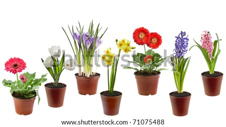 Collection set of Spring flowers  in the pot isolated on a white background