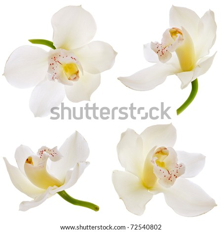 Collection set of White orchid isolated on white