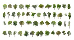 collection tree cut out from original background and replace with white background for easy to selection