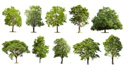 Collection tree set isolated on white background, Tropical green tree object