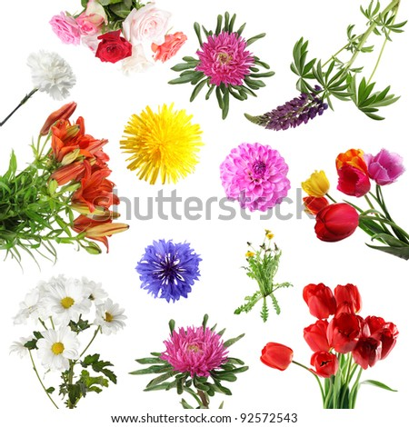 Collections of summer flowers isolated on white background