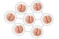 Collective consciousness. Communication and networking of human brains. Organs are isolated on a white background.