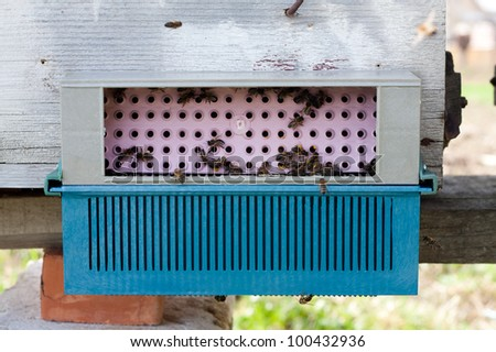 Collector of pollen on a hive - stock photo