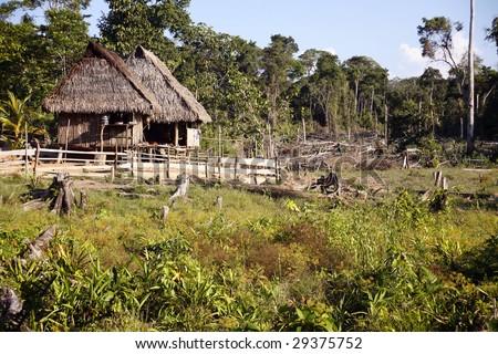 Colonist farm in former rainforest in the Peruvian Amazon