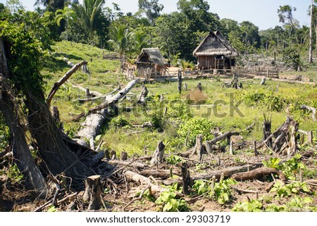 Colonist farmstead cut out of the rainforest in the Peruvian Amazon