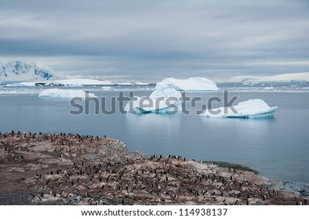 Colony of penguins and huge icebergs, view from the beach