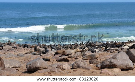 colony of seals on Cape Cross, Namibia,