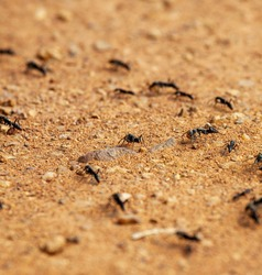 colony of warrior termites in the sand