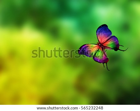 Color butterfly flying #565232248