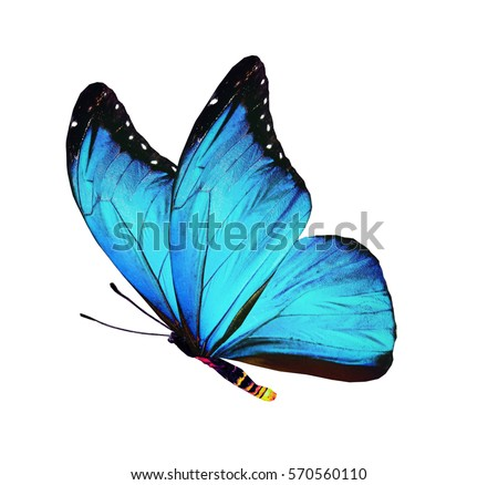 Color butterfly , isolated on white #570560110