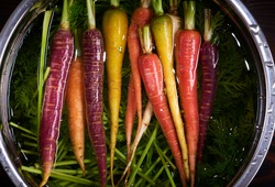 Color carrot with leaves at organic greengrocer's shop. stock photo.
