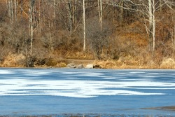 Color DSLR stock image of a partially frozen pond in winter. Horizontal with copy space for text