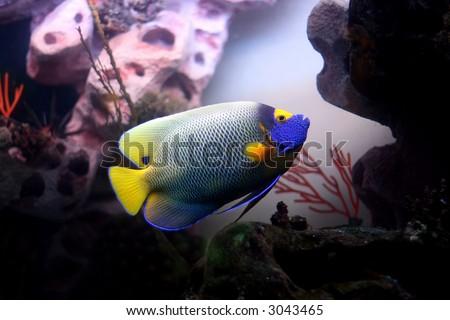 stock photo : Color fish in aquarium