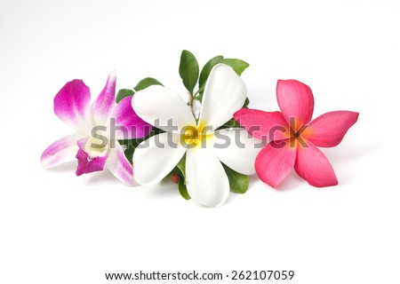 Color flower isolated on white background