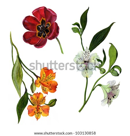 Color illustration of flowers isolated on white background