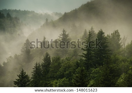 Color image of the clouds flowing through the pine trees along the Blue Ridge Parkway in Western North Carolina. #148011623