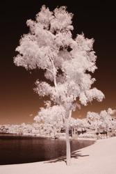 Color Infrared tree at a residential lakeside