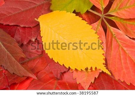 Color leaves background, autumn composition