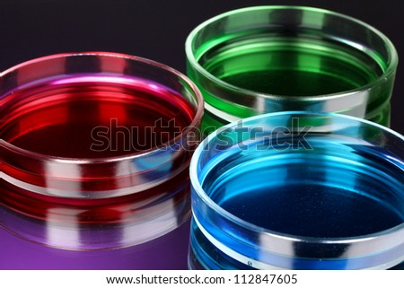 color liquid in petri dishes on violet background - stock photo