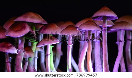 Color magic mushrooms - psilocybe