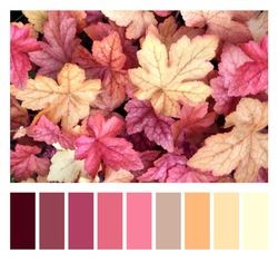 Color matching palette with complimentary colour swatches.  Fall season color matching palette. Horizontal nature background with autumn leaves of purple and yellow color