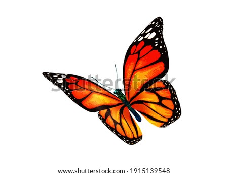 Color monarch butterfly , isolated on the white background Stock photo ©