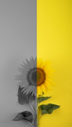 Color of the year 2021. Illuminating yellow and Ultimate Gray. Yellow and Gray background, web banner.