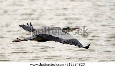 heron bird symbolism