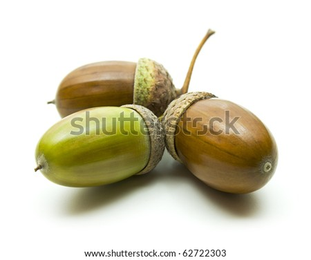 Color photo of green acorns on a white background