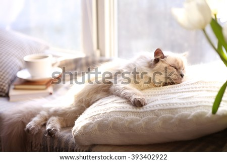 Color-point cat lying on pillow near the window in living room