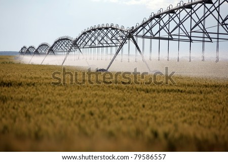 Color shot of an irrigation equipment on a wheat field