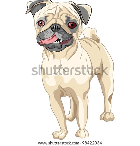 color sketch of the dog smile fawn pug breed - stock photo