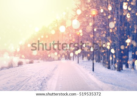 Color snowflakes on winter park background. Snowfall in park. Bright winter sunset. Beautiful Christmas theme.
