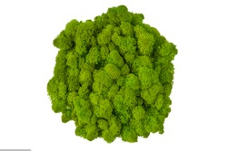 color stabilized moss for decoration