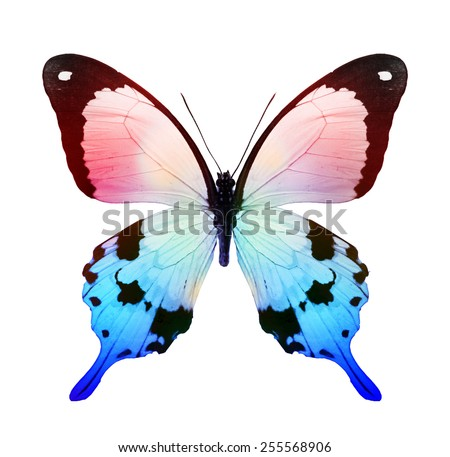 Color tropical butterfly isolated on white
