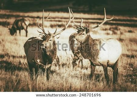 colorado elks gang in estes...
