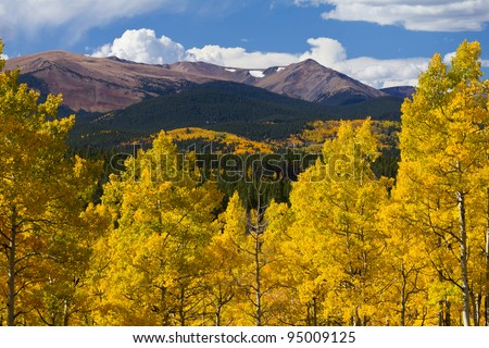 Colorado Rocky Mountains and golden aspen trees in Fall.
