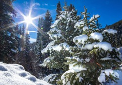 Colorado Winter Sunshine Landscape Forrest