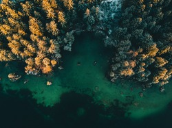 Colored autumn trees from a bird's eye view, from above, drone image, forest from above at a lake in the Alps, sunrise, Hintersee, Germany