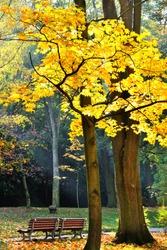 colored autumn trees in park, Czech Republic