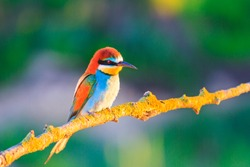 colored bird sits on a branch in the rays of the sun