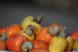 Colored cashews, in various stages of ripening, in Pão de Açúcar, city of the state of Alagoas, in northeastern Brazil.
